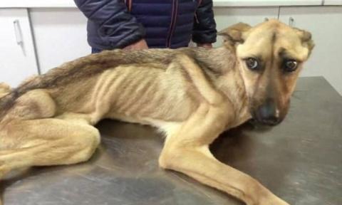 Невероятное восстановление собаки, которая не могла даже ходить от истощения!
