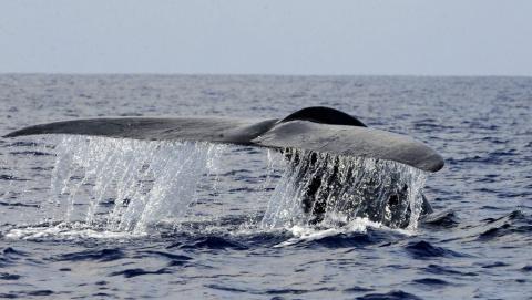 Синий кит?