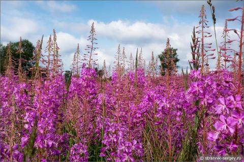 Роскошный букет из полевых цветов