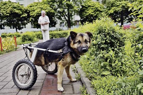 Пес-инвалид научился бегать на двух лапах