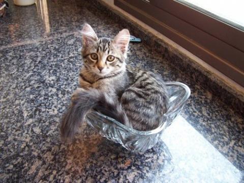 Кошки, которые поместятся в …