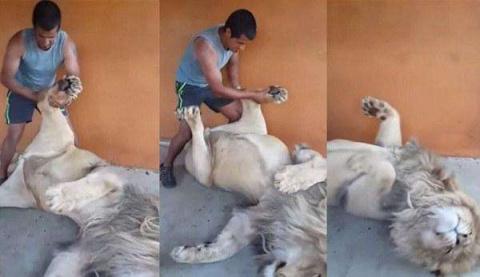 Видео: Массаж ступней льву