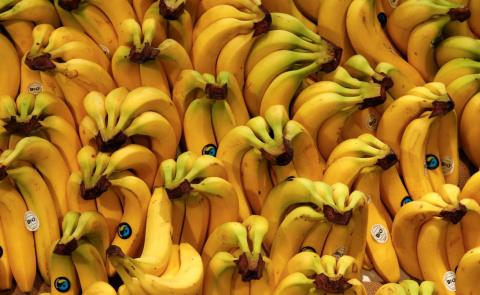 Эволюция банана: от лесного …