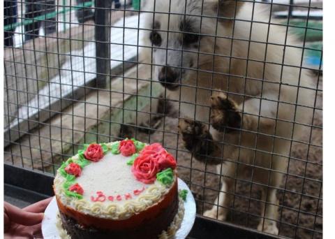 Торт для лисички