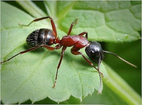 Как избавиться от муравьёв на огороде