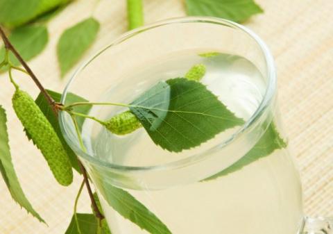 Березовый сок – польза и вред лечебные свойства рецепты противопоказания