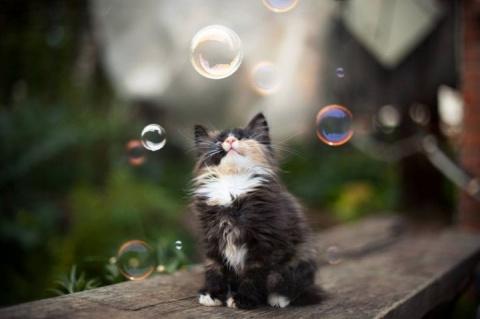 Коту для счастья нужно мало