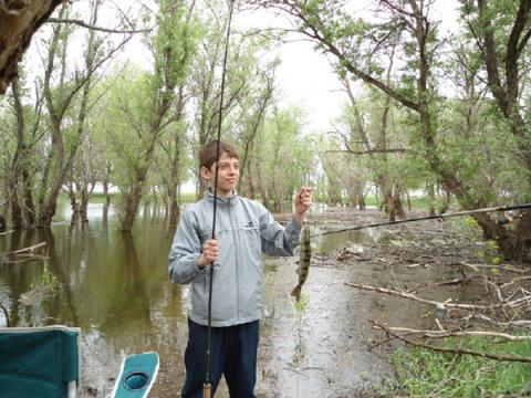 Снова о вобле и нерестовых запретах... #рыбалка, дельта Волги, Самосделка