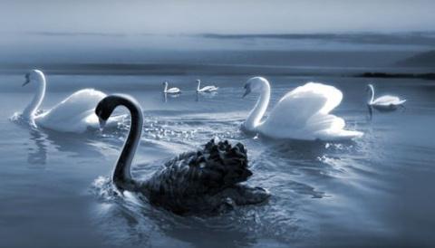 Стратегия «Черный лебедь»