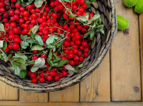 Красная рябина в домашнюю аптечку: польза, противопоказания и использование