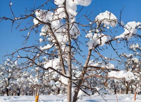 Предзимье: деревьям требуется помощь