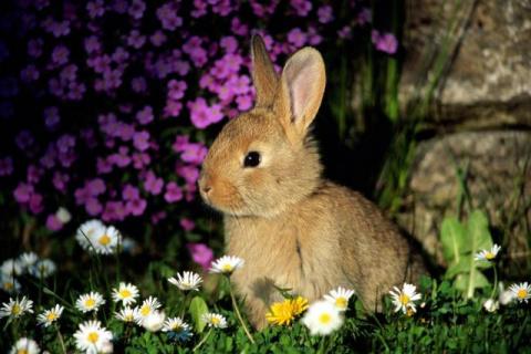 Опытный кролик. сказка от Эльфики.