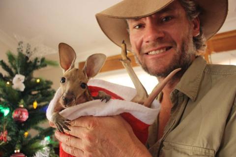 Маленькие кенгурята остаются…