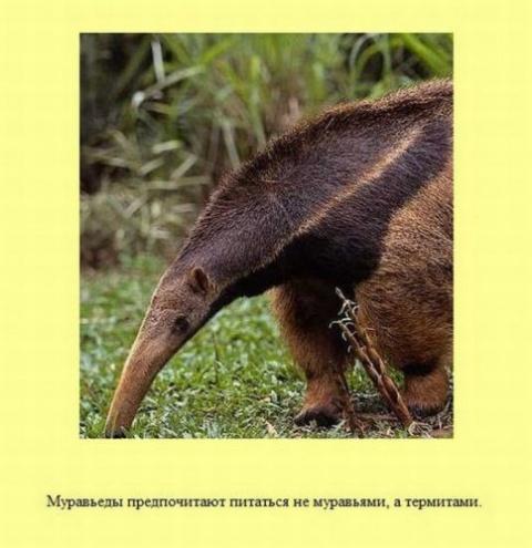 Интересные факты: немного о животных и не только