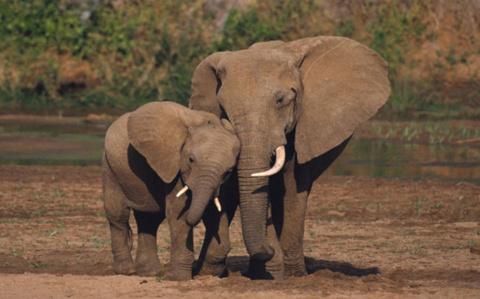 На что способны слоны - интересные факты! Кот-медбрат (история из жизни)