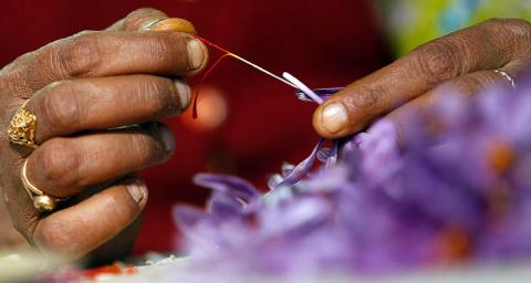 Шафран — самая дорогая пряность в мире