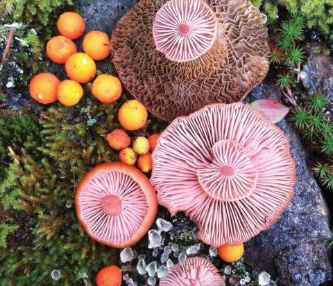 Яркие… грибы!
