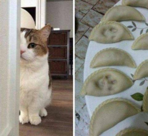 Очаровательные животные, кот…