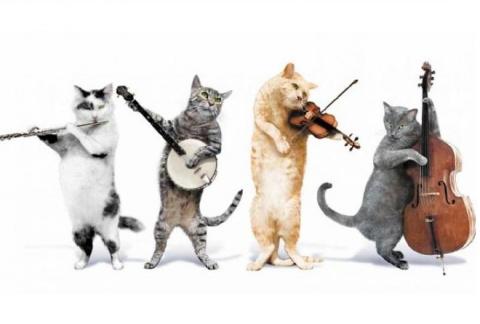 О музыкантах