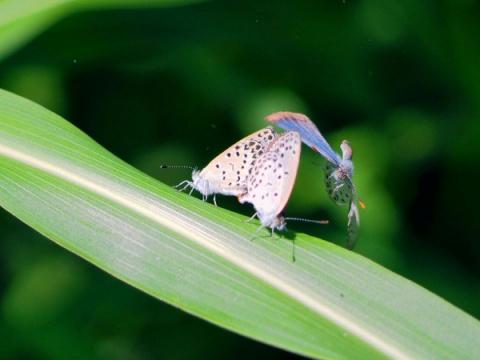 Fukushima radiation still poisoning insects