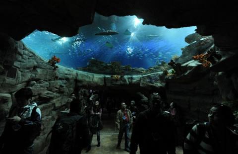 Открытие нового аквариума в …