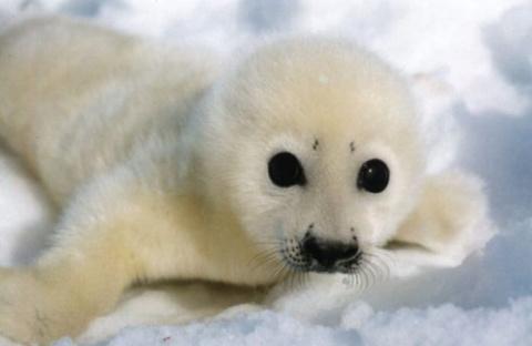 Россия закрыла для норвежских исследовательских судов Баренцево море