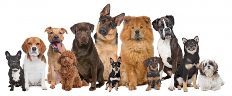 Очень красивые собаки! Отбир…