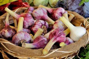Как хранить урожай чеснока?