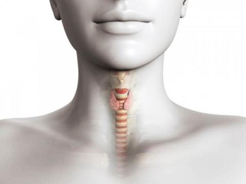 Признаки проблем с щитовидно…
