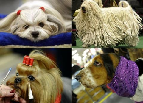 Выставка собак Вестминстерск…