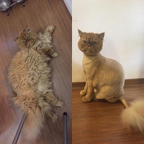 18 кошек, явно недовольных своей новой прической