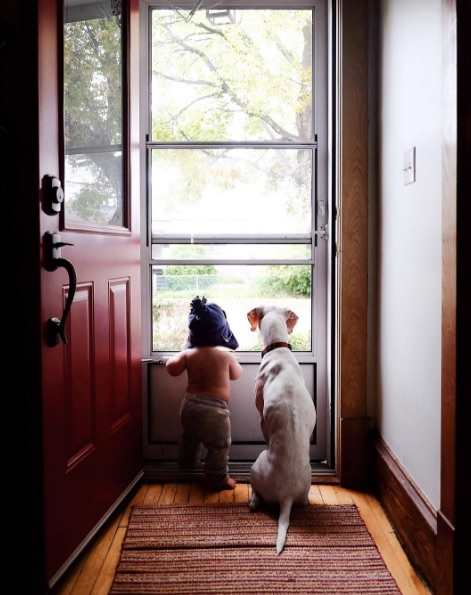 Спасённая от живодеров собак…
