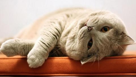 14 способов, как коты демонс…