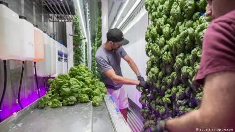 Городские фермы - шанс накор…