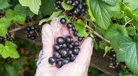 5 секретов небывалого урожая…