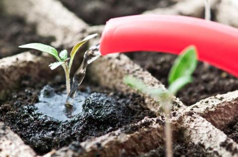 Подкормите свои растения коктейлем «банановая радость»!