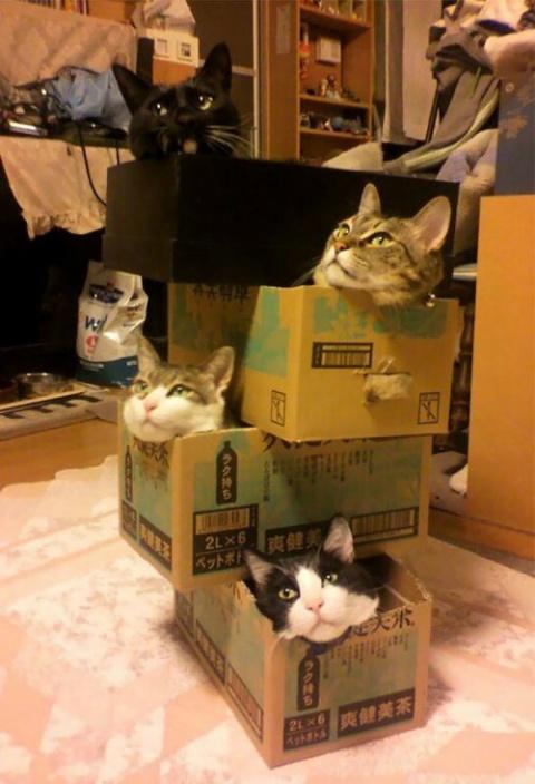 Кошки, которым везде удобно