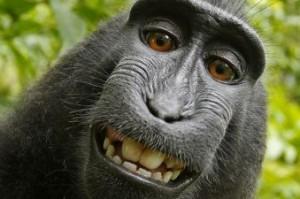 В Судаке обезьяны покусали туристов
