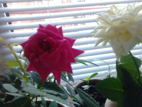 Здоровье.  Влияние  цветов в доме  на  наше  здоровье? Какие  полезны,какие  вредны(если  таковые  имеются?)
