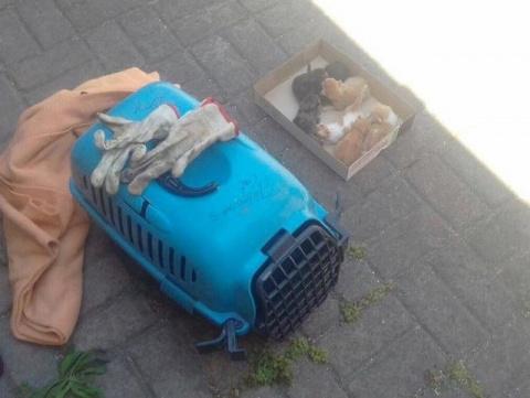 7 новорожденных котят-найдён…