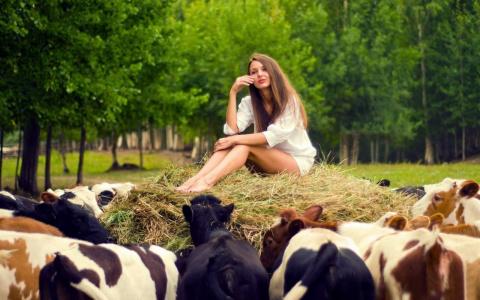 Очень мудрая притча: «Я стою 10 коров»!