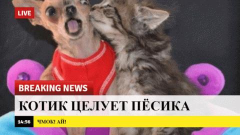 15 весёлых новостей для тех,…