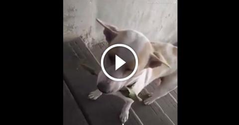 Бездомный пес всегда приноси…