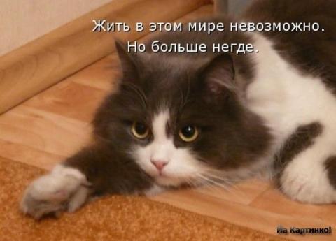 Людмила милая