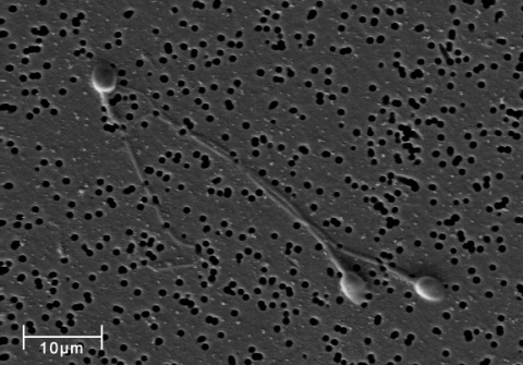Длительность сна влияет на качество спермы
