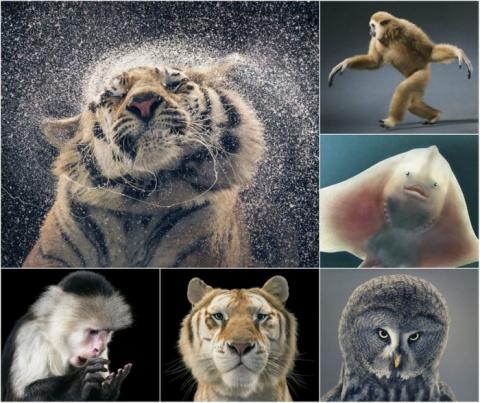 Удивительные портреты животн…
