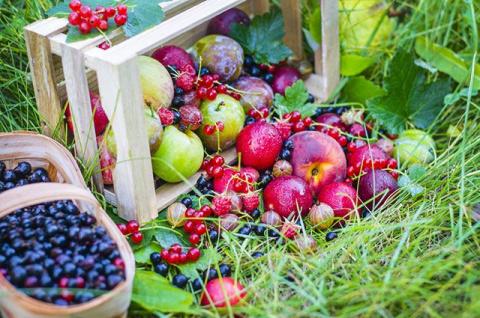 Выбор культур. Какие плодовые и ягодные подойдут вашему участку