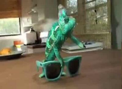 Чувство цвета: откуда хамелеон знает, какого цвета очки????