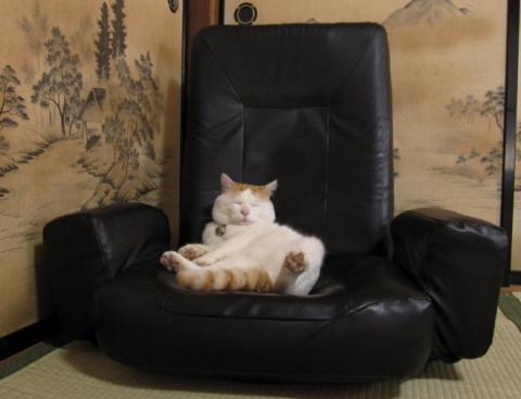 Как расслабляются коты))) умора))