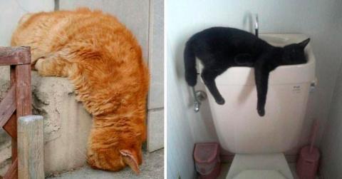Кошачье сонное царство: когда внезапно очень устал (22 фото)